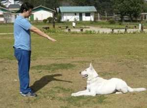 adestrar-o-cão-deita
